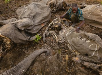 04-decayed-bodies-bouba-ndjidah-park_1818x1352.jpg