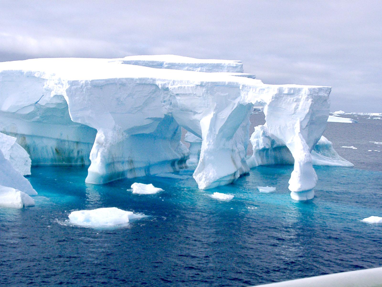 antartida-weddelll.jpg