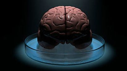 111202125108_neurociencia_cerebro_304x171_spl.jpg